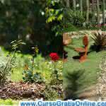 Como ter um Jardim em Casa – Fotos de Jardins